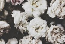 flowers / by Kjirsten Brynn Embley