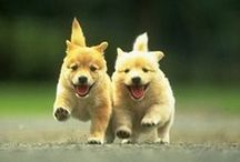 ANIMALS: Joyous! / Smiles all round! / by Claire Frances
