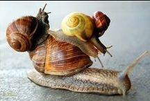 ANIMALS: Snails+Slugs / Just Sliding Along. / by Claire Frances