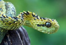 ANIMALS: Reptiles+Amphibians / Slime and scales! / by Claire Frances