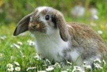 ANIMALS: Rabbits+Pikas+Hares / Cotton tails! / by Claire Frances
