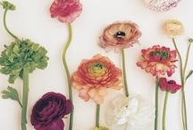 · Flowers · / by Cayetana Guijarro Bravo