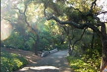Favorite Gardens / When all else fails, a walk through a garden sets me right every time.