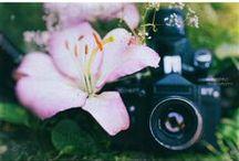 Art Photographs / Some of my lens creativity