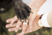 Pets Down The Aisle | Wedding Mall