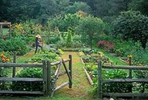 homesteading/garden / by MaryCatherine Garrison