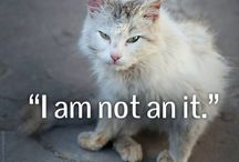 every life counts!! / Animals are not something, they are someone! Help and rescue!!  / by Nina