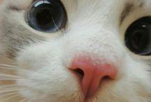 I ❤ cats / by Nina