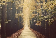 Fall / by Megan Valder