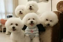 Cuddly Buddly Pets / Cute, Funny, Crazy n Kind Pets