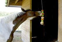 horse & dog treats / by Correna's Pins