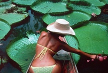 WATER LILIES, LOTUS & MONET / by C O