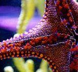 Twinkle twinkle little starfish