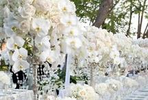 Fabulous Floral! / Centerpiece and Floral Arrangement Ideas / by B. Lovely Events