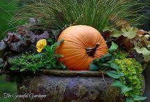 Fall Back...Thanksgiving / Decor Ideas