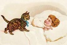 Cat Lady / by Amanda Ashworth