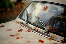 Autumnal / Autumn. It's the most wonderful time of the year