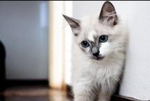 Pets / A TECNISA quer conhecer seu animal de estimação. Envie uma foto para redessociais@tecnisa.com.br com seu nome e seu Facebook. Seu amigo pode ser destaque aqui em nossa página no Facebook.  Participe!  Conheça os empreendimentos com Pet Care da TECNISA http://ow.ly/amWuz