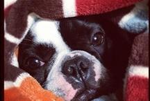 Pets Inverno / Mande para TECNISA uma foto do seu animal de estimação com roupinha de inverno. Envie sua foto para redessociais@tecnisa.com.br que publicaremos aqui no Pinterest e no Facebook. Não esqueça dos seus nomes!