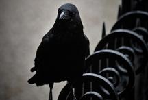 Gothic Images / by Mark Richardson