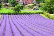 Campos de lavanda | Lavender fields / Porque nos encanta la lavanda, la Provenza y los espacios abiertos. Relajate y disfruta. ................. Because we love lavender, Provence and open spaces. Relax and enjoy.