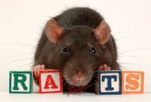 I Love Rats / by LeeAnn Frazier
