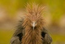 Birds / by LeeAnn Frazier