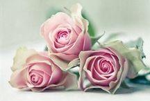 Un jardín de rosas / Bonitos jardines de rosas y conjuntos florales
