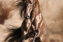 Majestic Equine - Pure Beauty / I am absolutely in awe of these magnificent animals!