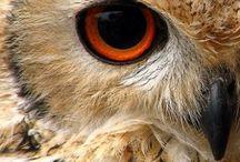 owls / by Leonie Lewis