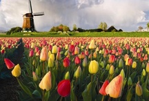 Dutch Heritage / by Julie Carns
