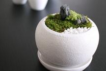 Bonsai~盆栽~ / by Kaoru N