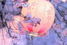 SAKURA-桜- / by Kaoru N
