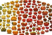 Food Garden Diversity/Varieties / This glorious rainbow of fruits and vegetables is what we stand to lose when agriculture is taken over by monoculture and invasive GM plants. / by The Blasphemous Homemaker