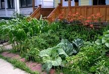 Edible Front Yard Garden / by The Blasphemous Homemaker