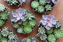 succulents. / by B E C K Y . L E W I S