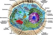 Science is My Passion / All types of science; majorly Bio with touches of Anatomy, Astronomy, Anthropology, Medicine and Nature-related stuff  / by Brittany Spencer