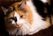 """Thomasina's Purrls Of Wisdom / Need advice about your cats? Just ask Thomasina. She's my resident cat expert because, as the saying goes, """"it takes one to know one."""""""