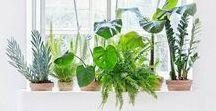 home : indoor jungle