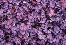 Shrubs in the Garden / Shrubs offer beautiful structure to any garden. Find ideas and favorites here.