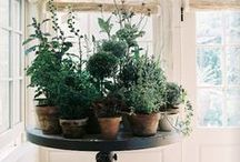 Indoor Plants / these are plants and they're not outside. / by Emily Taggart