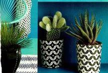 Flowers & Plant / by Laura De Matteis