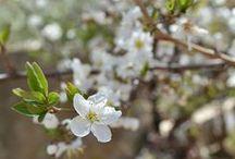 Celebrating Spring / by Kresha @ Nourishing Joy