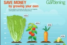 Fine Gardening's Infographics / Creative visuals that help you improve your garden / by Fine Gardening