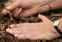 Garden Maintenance Tips / Planting, propagation, seed starting, watering tips and more!