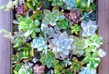 Succulents in the Garden / Smart succulents require less water and create a unique design.