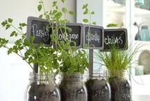 Indoor Gardening / Who says you need a big yard in order to garden? Bringing Mother Nature's treasures indoors can be just as fun!