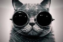 Schrödinger's cat  / Этот кот не дает покоя не только мне...