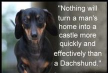 dachshunds / by Marcia Myers-Knoles