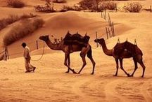 Travel & holidays to Arabia & the Middle East / A little selection of where we can provide a holiday in Arabia & the Middle East